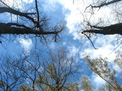 arboles y cielo
