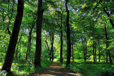 bosque_duisburg.jpg
