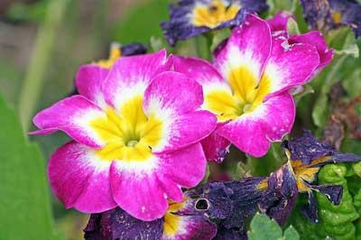flores asturias