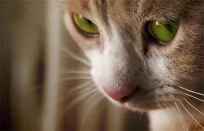 gatito2.jpg
