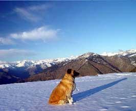 nievesorts.jpg
