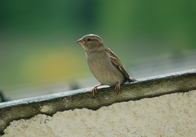 petit_oiseau.jpg