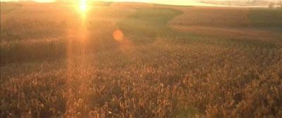 sol campos maíz, una historia verdadera